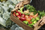 Фермери Търсим достъп до пазара в кризата