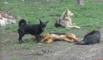 Национална програма за овладяване популацията на безстопанствените кучета